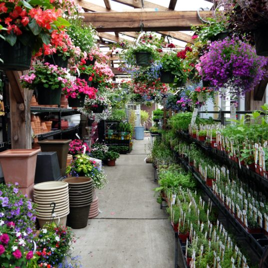 Where to get the best deals on plants and flowers
